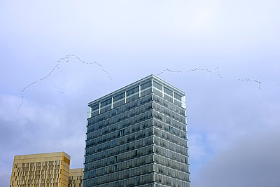 Luxembourg, crane formation flying over skyscrapers - p300m1206385 by Hartmut Loebermann