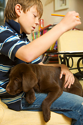 Boy and chocolate lab - p6690294 by Jutta Klee photography
