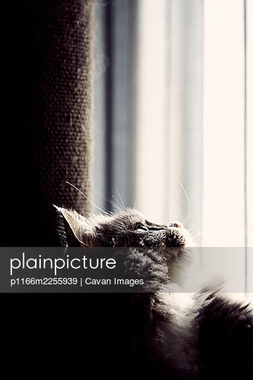 p1166m2255939 von Cavan Images