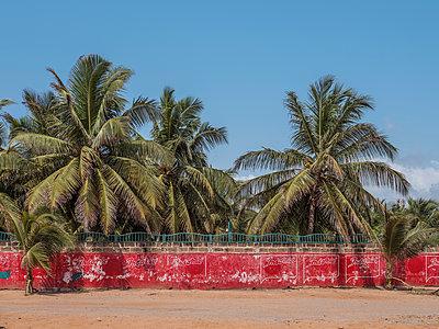 Palmen an einer roten Mauer am Strand - p390m1586493 von Frank Herfort
