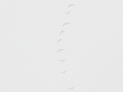 Zugvögel - p6060001 von Iris Friedrich