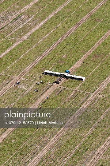 Germany, Cucumber harvesting machine at work - p1079m2152579 by Ulrich Mertens