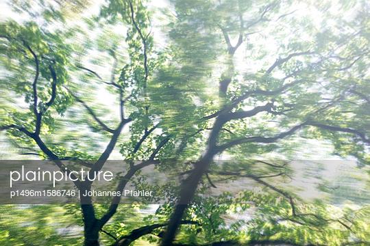 Baum Schein - p1496m1586746 von Johannes Pfahler