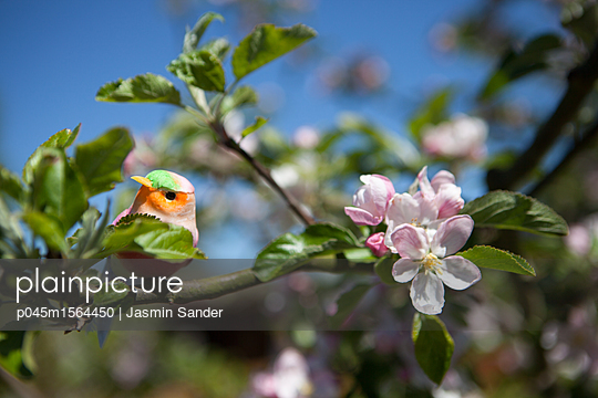 Süßer Vogel sitzt auf Ast - p045m1564450 von Jasmin Sander