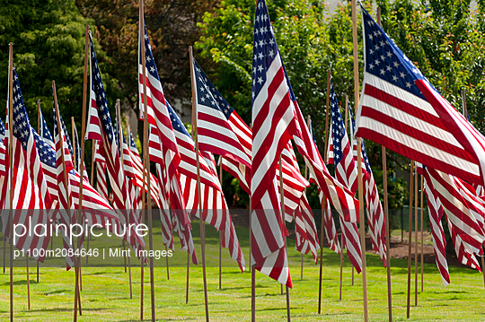 American flags in grass lawn,Bellevue, Washington, USA - p1100m2084646 by Mint Images
