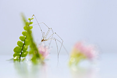 Delicate spider, close-up - p624m1045701f by Odilon Dimier