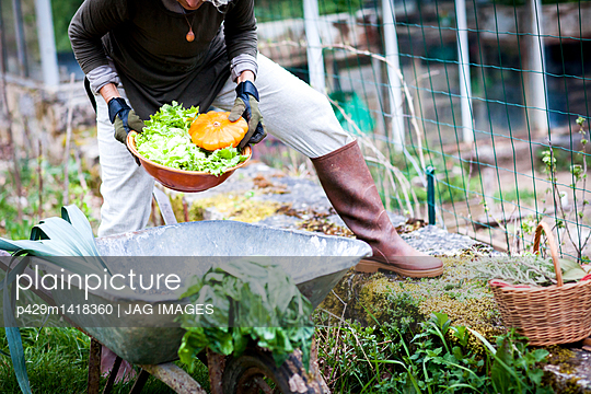 Neck down view of female gardener picking bowl of vegetables in garden - p429m1418360 by JAG IMAGES