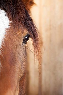 Pferde-Portrait - p435m755210 von Stefanie Grewel