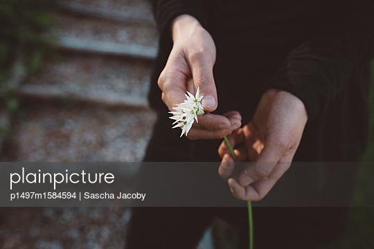 Junge Frau hält eine Pflanze - p1497m1584594 von Sascha Jacoby