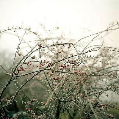 Twigs - p1186m972781 by Christine Henke