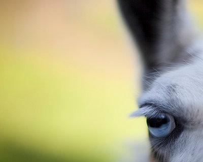 Lama - p445m702666 by Marie Docher