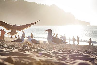 Möwen am Strand von San Francisco - p712m1468193 von Jana Kay