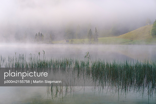 Germany, Bavaria, Mittenwald, Reeds growing on shore of Ferchensee lake with thick fog in background - p300m2155758 by Martin Siepmann