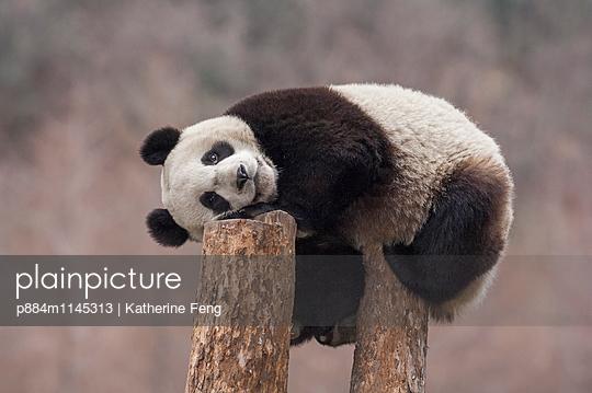 p884m1145313 von Katherine Feng
