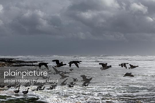 Zugvögel an der Küste - p910m1159384 von Philippe Lesprit