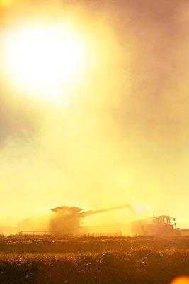 Combine harvester at work - p1057m2008313 by Stephen Shepherd