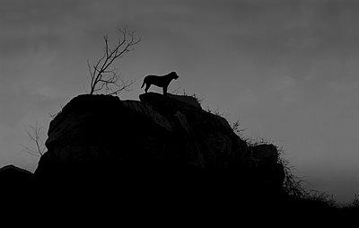 Hund auf Berg - p444m960707 von Müggenburg