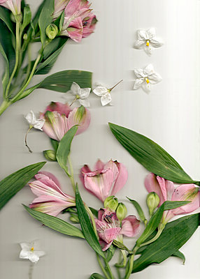 Pressing Peruvian lilies - p1248m2008575 by miguel sobreira
