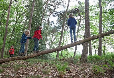 Children climbing on dead tree - p1231m1138067 by Iris Loonen