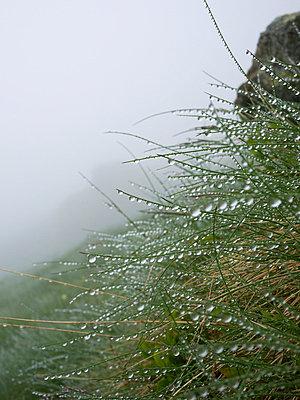 Wet grass - p6370263 by Florian Stern