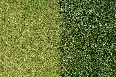 Golf putt - p5290020 by nataliadintrans