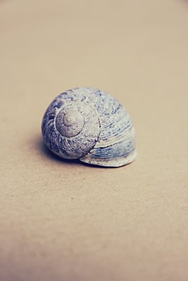 Snail shell - p879m2054874 by nico