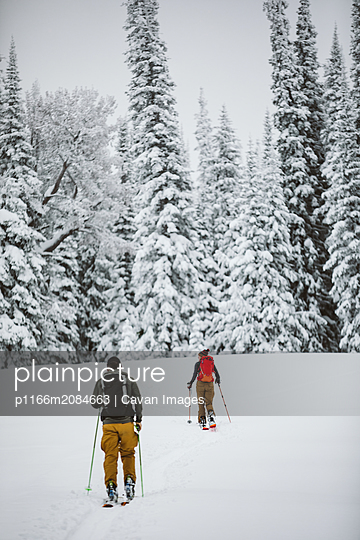 two skiers head into snow covered trees on a backcountry adventure - p1166m2084663 by Cavan Images