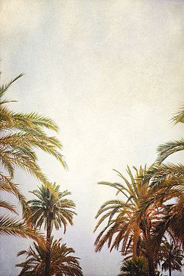 Palm Trees - p1248m1590745 by miguel sobreira