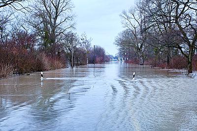 Hochwasser am Rhein - p719m1539558 von Rudi Sebastian