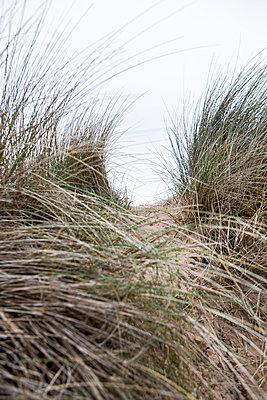 Dünengras  - p1057m1220629 von Stephen Shepherd