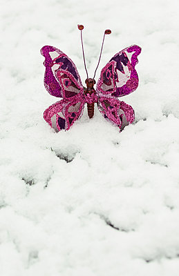 Butterfly in a snow - p1390m1513044 by Svetlana Sewell