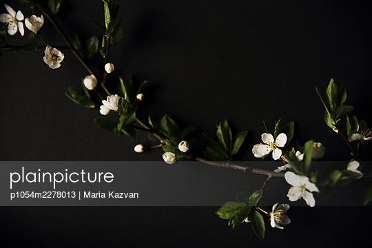 Blossoms - p1054m2278013 by Maria Kazvan