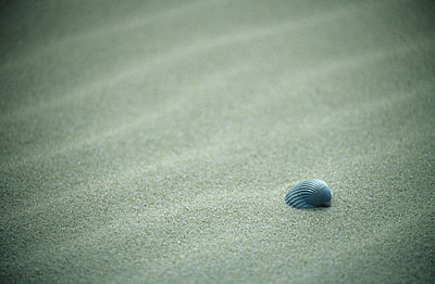 Shell on the beach - p2683213 by M. Klippel