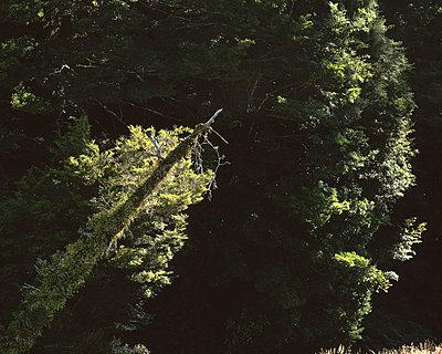 Regenwald in Neuseeland - p1016m792596 von Jochen Knobloch