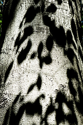 Shadow on a tree trunk - p1221m1165521 by Frank Lothar Lange