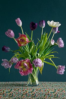Blühende Tulpen - p8770063 von Julia Wagner