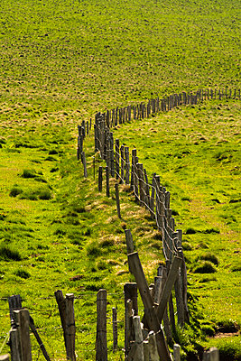 Fence post in the pasture. Auvergne. France. - p813m1039463 by B.Jaubert