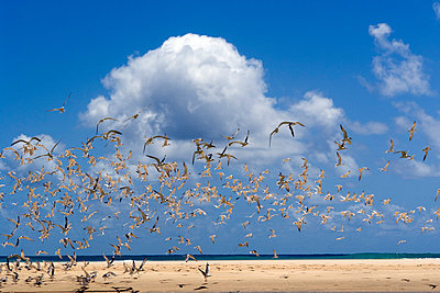 Vogelschwarm - p1016m792528 von Jochen Knobloch