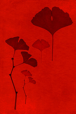 Computer generated abstract pattern of dried ginkgo biloba leaves on red background - p1047m2290881 by Sally Mundy