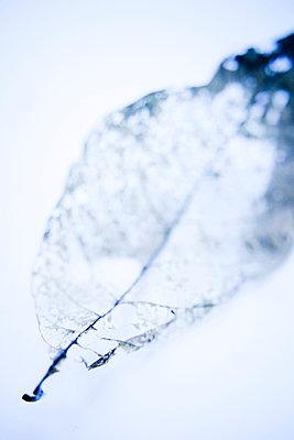 Leaf vein - p580m1119212 by Eva Z. Genthe