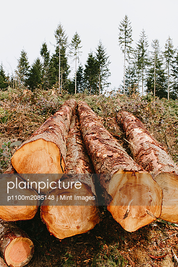 Stacked logs, freshly logged spruce, hemlock and fir trees - p1100m2085148 by Mint Images