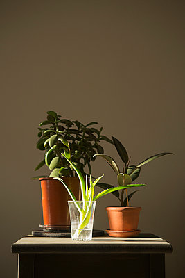 Potted plants in the morning light - p1149m1051616 by Yvonne Röder