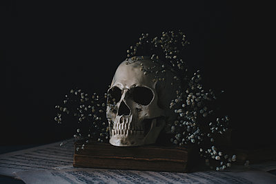 Skull Still life - p1623m2221859 by Donatella Loi