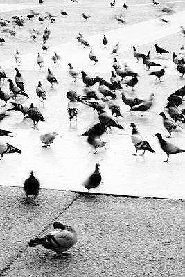 Tauben auf einem Platz - p415m1191200 von Tanja Luther