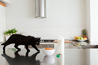 Black cat on counter with milk and cereal - p9244177f by Image Source