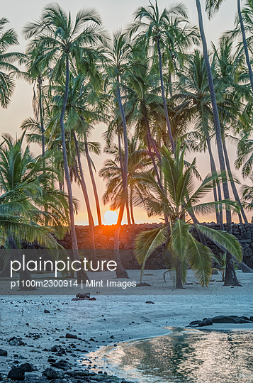 Palm trees on a beach. - p1100m2300914 by Mint Images