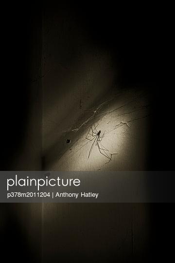 p378m2011204 von Anthony Hatley