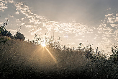 Sun rays and tall grass - p1402m2007562 by Jerome Paressant