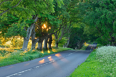 United Kingdom, England, Dorset, beech tree lined road with sunbeams - p300m2103552 von Martin Rügner