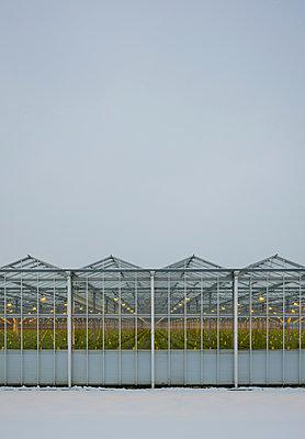 Greenhouse using LED lights, Made, Noord-Brabant, Netherlands - p429m1569375 by Mischa Keijser